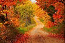 Automn leaves / by Bélinda Ibrahim