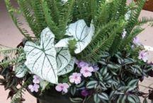 aranjamente florale la ghiveci