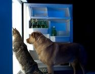 Pet health / Anything related to pet health from acupuncture to Reiki, swimming, etc.