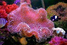 Coral fish tank