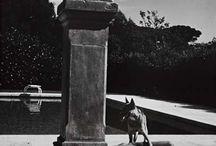 Helmut Newton (1920-2004) / Хе́льмут Нью́тон — немецкий и австралийский фотограф и фотохудожник