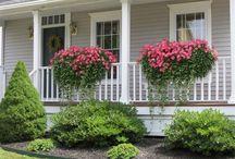 Balkónové květiny