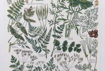 Adorable Floral Patterns - studies, illustrations, printings...