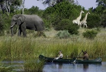 Safaris / Get up close and personal with the best on offer in Africa.