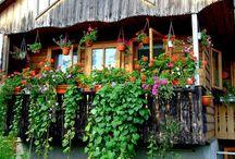 Balcony gardening / by Roz Weitzman