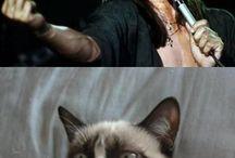 Grumpy cat for jake