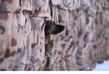 4 legs heroes among us / Psí hrdinové, váleční psi, čtyřnozí bojovníci