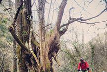 Bosques de Asturias
