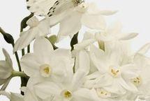 Orquídea e borboleta