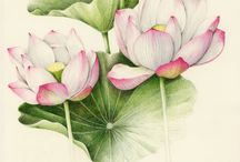 Botanical images / Watercolor botanical drawing; vintage and modern