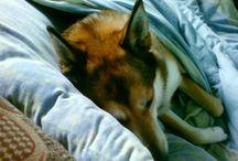 ...............1402 /  my favorite dog