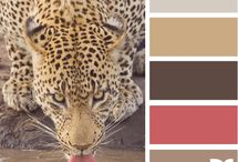 Colors and Inspiration