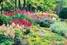 shade garden / by Olga Forrest