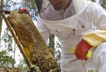 The Bees Knees / Bee keeping