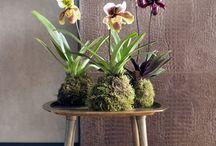 Haal de lente in huis met deze kamerplanten