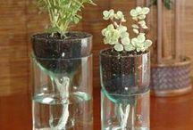 cicek ve vazo