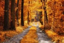 seasons / by Donovan Britton