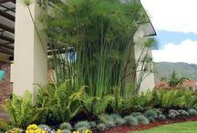 jardín gogle