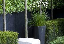 bloem tuin