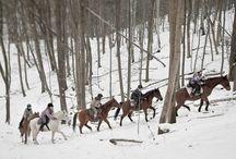 konie to nasza pasja / Ośrodek konny Kolibki Adventure Park. Natura konia #koń #natura #horses #quotes #walk