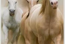 konie / by basia.w w