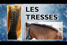 coiffure equestre
