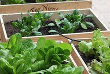 Kleine groentetuintjes