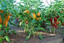 Gardening / Edible