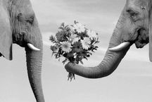 I adore you, Elephants.