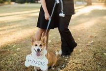 """the """"dog of honor"""" / #dogofhonor #weddings"""