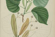 Ilustrovaný herbář