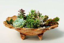 In appreciation of succulents... / by Acquired Taste
