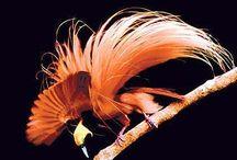 Birds of Paradise / by Catherine Manoli