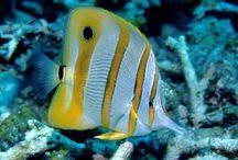 Sydney Harbour Biotope Aquarium