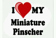 Pincher love