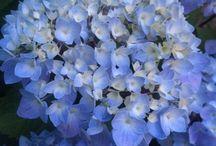 Get these plants in my garden / by Alissa R.