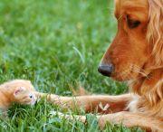 Diploma Programs / Small Animal Technician Program Veterinary Receptionist Program