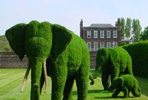 Awesome Topiary / Follow this board for a curated list of out of the box topiary ideas