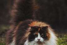 Spirit Of The Cat ♡