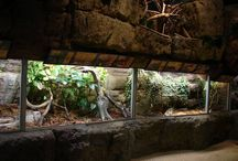 Zoo exhibits and decoration