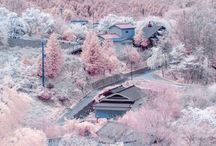 BLOSSOM TIME IN JAPAN