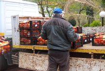 34 τόνοι δωρεάν τρόφιμα στους Δημότες, από Δήμο της Θεσσαλονίκης