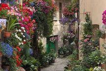 ruas decoradas com flores