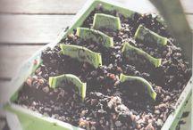 Plant Propagation