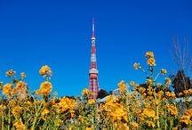 TOKYO / Scene, Food and Sightseen of TOKYO