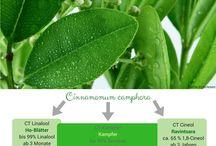 Dufte Grafiken / Aromatherapy  Ausbildung DIY
