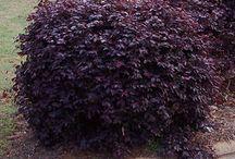 bushes & shrubs