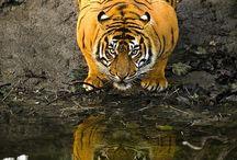wildlife / Nature