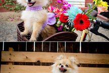 Chanel / Dog