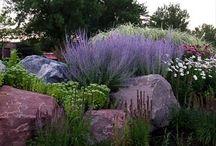 Skalky, kameny v zahradě